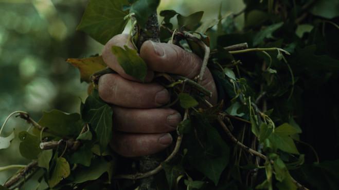 Alberi, l'unità fondamentale del cinema di Michelangelo Frammartino