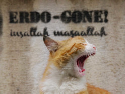 Kedi – La città dei gatti di Ceyda Torun: la recensione in anteprima