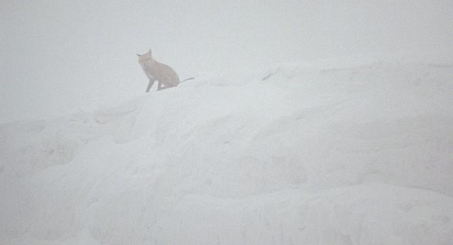 Nebel (fog) di Nicole Vögele – Festival dei Popoli 55, concorso: la recensione