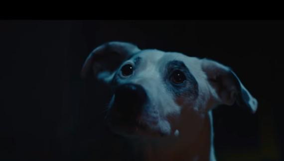 The Chemical Brothers – We've Got To Try: il mondo sarà dei cani. Il divertentissimo video di Ninian Doff